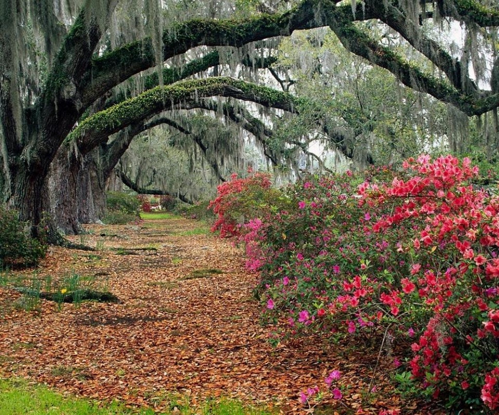 Magnolia Plantation, Charleston. Photo by leatherwoods via photobucket.