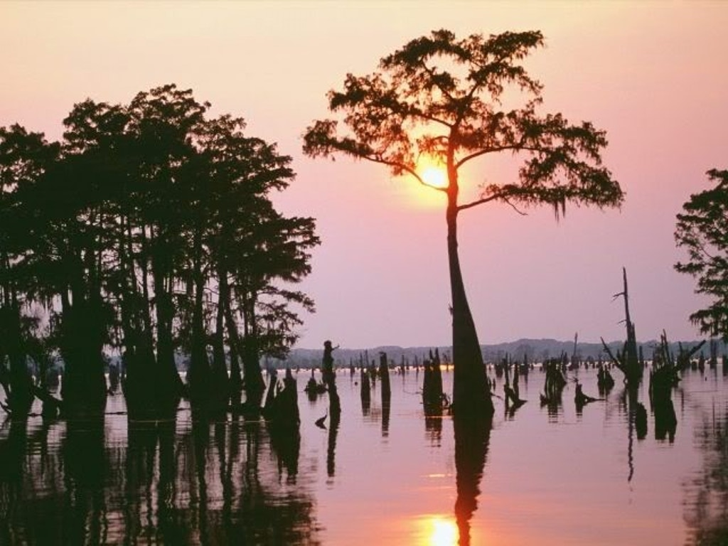 Louisiana Bayou. Photo by Bev Heald, via photobucket.